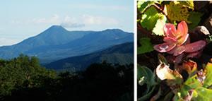 20120911-12八ヶ岳