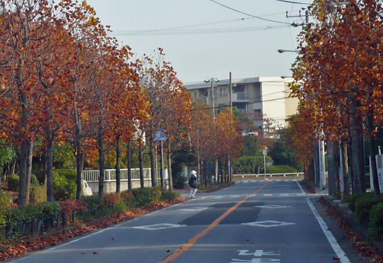 20081003toro5.jpg