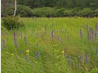 花トレ入笠山